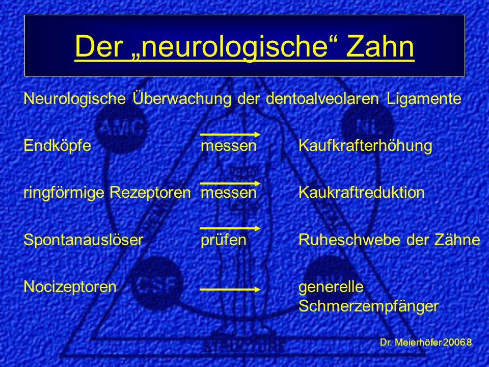 Dr. Meierhöfer 2006 8 Neurologische Überwachung der dentoalveolaren Ligamente EndköpfemessenKaufkrafterhöhung ringförmige RezeptorenmessenKaukraftredu