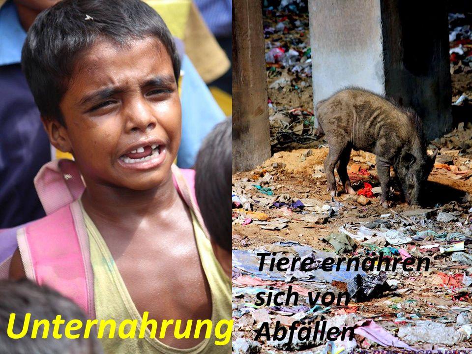 Unternahrung Tiere ernähren sich von Abfällen