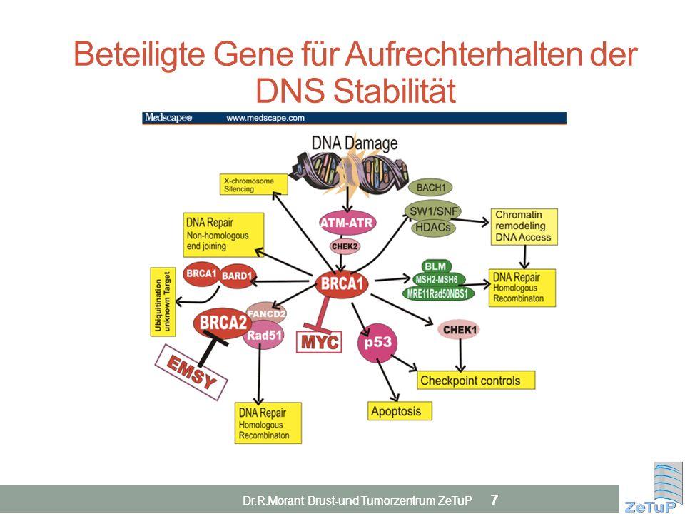 7 7 Beteiligte Gene für Aufrechterhalten der DNS Stabilität