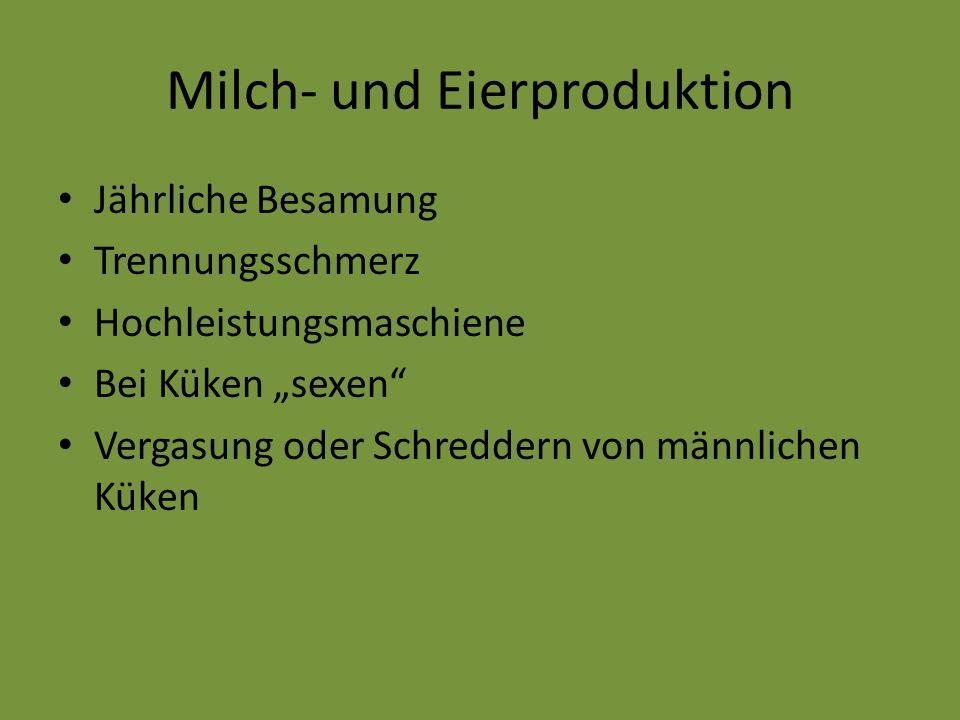 """Milch- und Eierproduktion Jährliche Besamung Trennungsschmerz Hochleistungsmaschiene Bei Küken """"sexen"""" Vergasung oder Schreddern von männlichen Küken"""