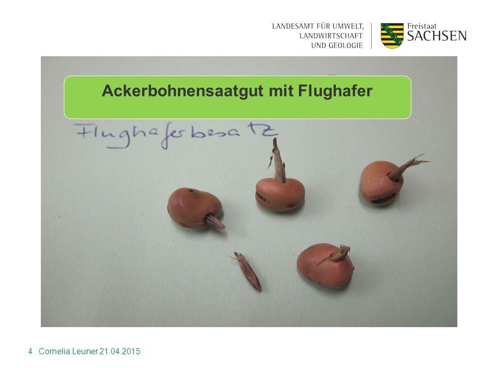 Wurzelbahnfluoreszens bei WD 5 Cornelia Leuner 21.04.2015