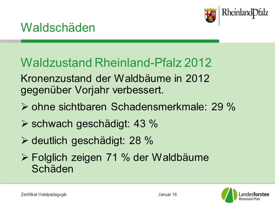 Zertifikat WaldpädagogikJanuar 16 Waldschäden Waldzustand Rheinland-Pfalz 2012 Kronenzustand der Waldbäume in 2012 gegenüber Vorjahr verbessert.