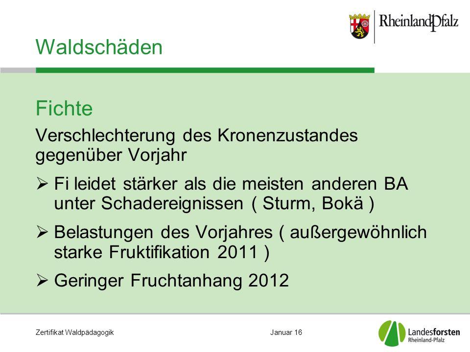 Zertifikat WaldpädagogikJanuar 16 Waldschäden Fichte Verschlechterung des Kronenzustandes gegenüber Vorjahr  Fi leidet stärker als die meisten andere
