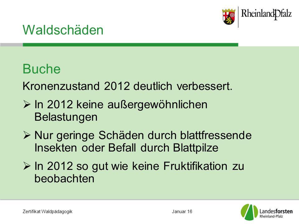 Zertifikat WaldpädagogikJanuar 16 Waldschäden Buche Kronenzustand 2012 deutlich verbessert.  In 2012 keine außergewöhnlichen Belastungen  Nur gering