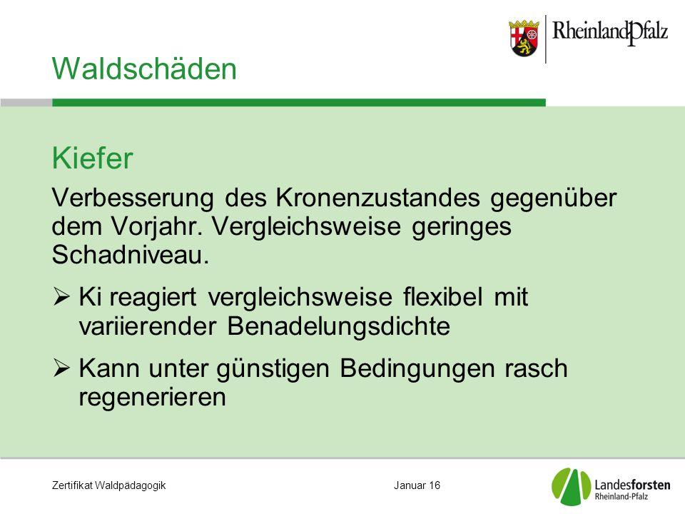 Zertifikat WaldpädagogikJanuar 16 Waldschäden Kiefer Verbesserung des Kronenzustandes gegenüber dem Vorjahr. Vergleichsweise geringes Schadniveau.  K
