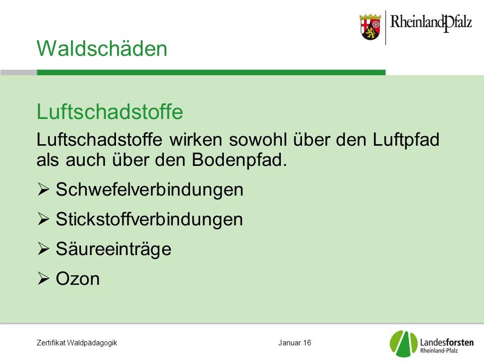 Zertifikat WaldpädagogikJanuar 16 Waldschäden Luftschadstoffe Luftschadstoffe wirken sowohl über den Luftpfad als auch über den Bodenpfad.  Schwefelv