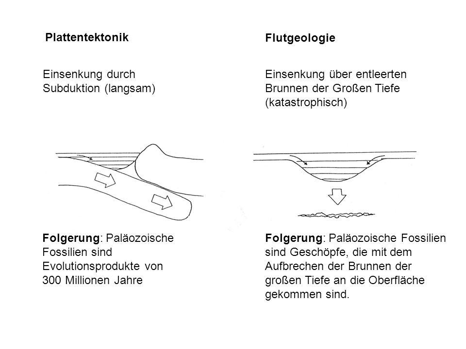 Plattentektonik Flutgeologie Einsenkung durch Subduktion (langsam) Einsenkung über entleerten Brunnen der Großen Tiefe (katastrophisch) Folgerung: Pal