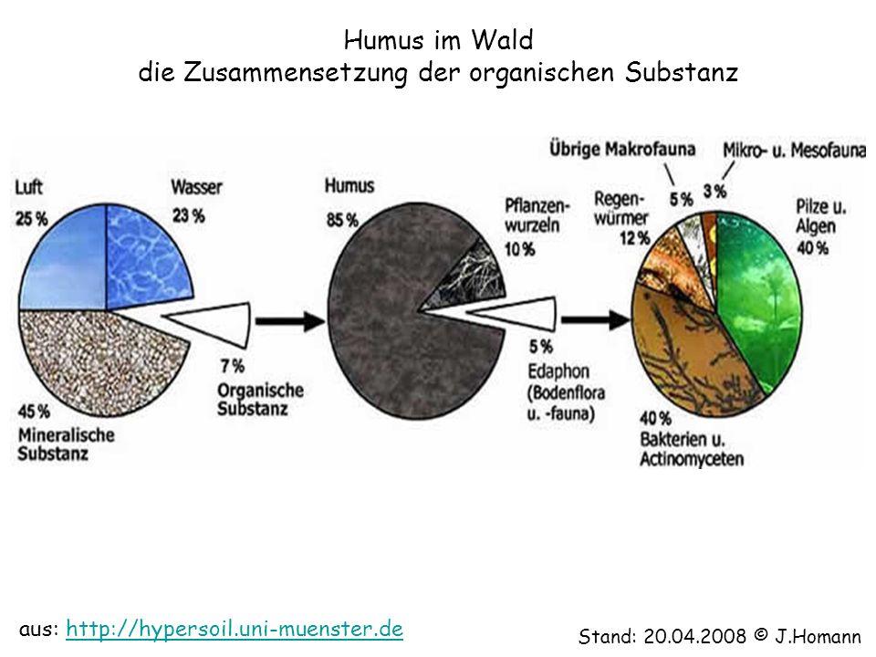 Humus im Wald die Zusammensetzung der organischen Substanz Stand: 20.04.2008 © J.Homann aus: http://hypersoil.uni-muenster.dehttp://hypersoil.uni-muen