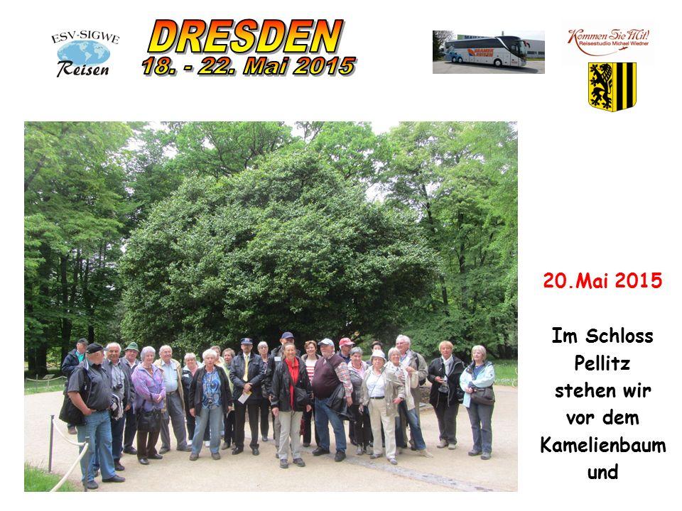 20.Mai 2015 Im Schloss Pellitz stehen wir vor dem Kamelienbaum und