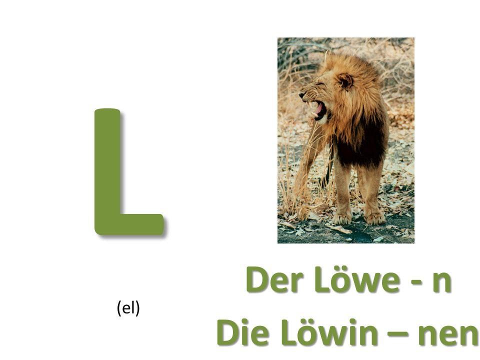 L (el) Der Löwe - n Die Löwin – nen