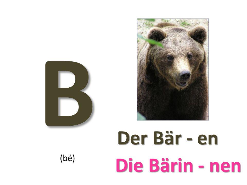 B Der Bär - en Der Bär - en (bé) Die Bärin - nen Die Bärin - nen