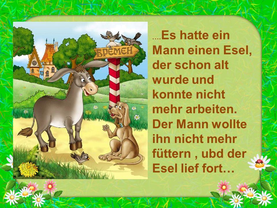 …. Es hatte ein Mann einen Esel, der schon alt wurde und konnte nicht mehr arbeiten. Der Mann wollte ihn nicht mehr füttern, ubd der Esel lief fort…