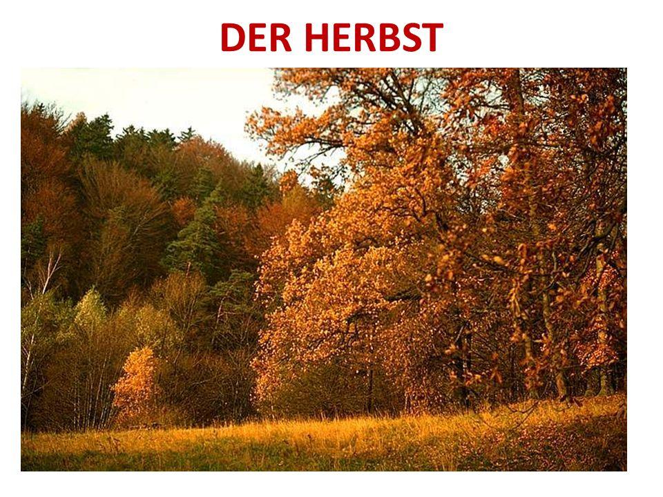 Die Blätter sind rot, gelb, braun und bunt.