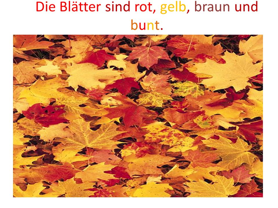 Es ist Herbst.Bunte Blätter fliegen. Bunte Blätter, rot und gelb, Auf der Erde liegen.
