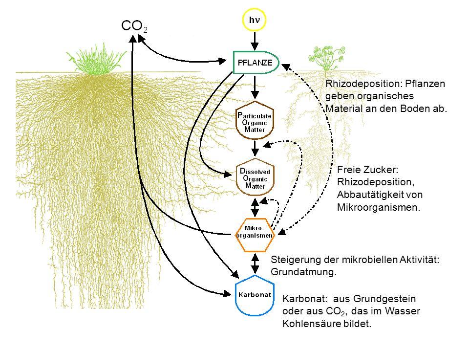 Rhizodeposition: Pflanzen geben organisches Material an den Boden ab. Freie Zucker: Rhizodeposition, Abbautätigkeit von Mikroorganismen. Steigerung de
