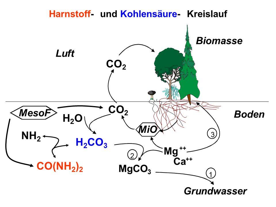 MgCO 3 Mg ++ Ca ++ Boden Luft Grundwasser 1 2 3 Harnstoff- und Kohlensäure- Kreislauf MiO Biomasse CO(NH 2 ) 2 NH 2 H2OH2O H 2 CO 3 CO 2 MesoF