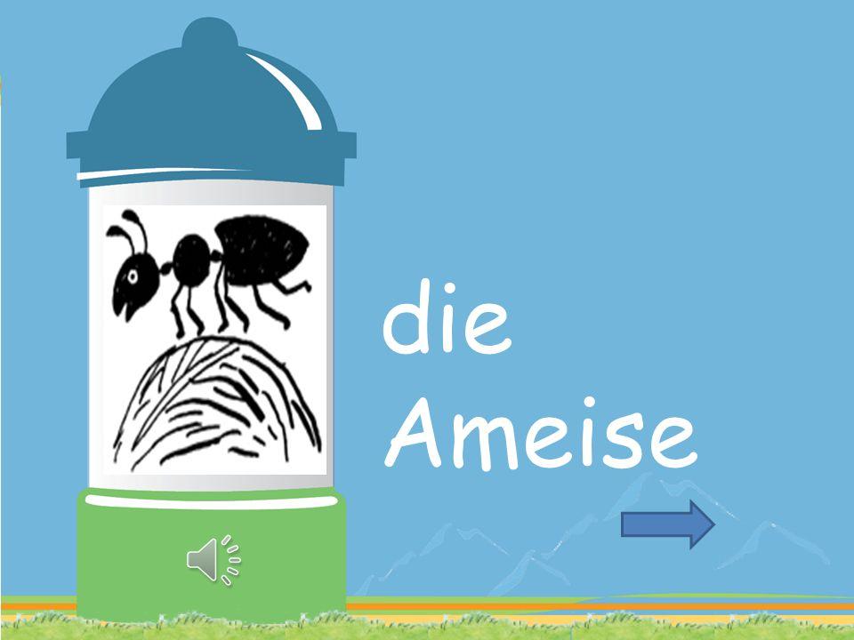 Ameise ordentlich viel mein leben
