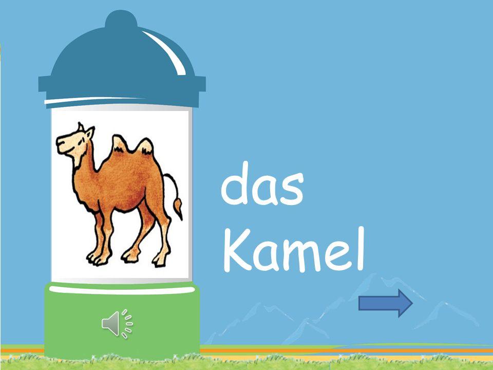 KAMEL SAUBER EDEL WER MEINEN