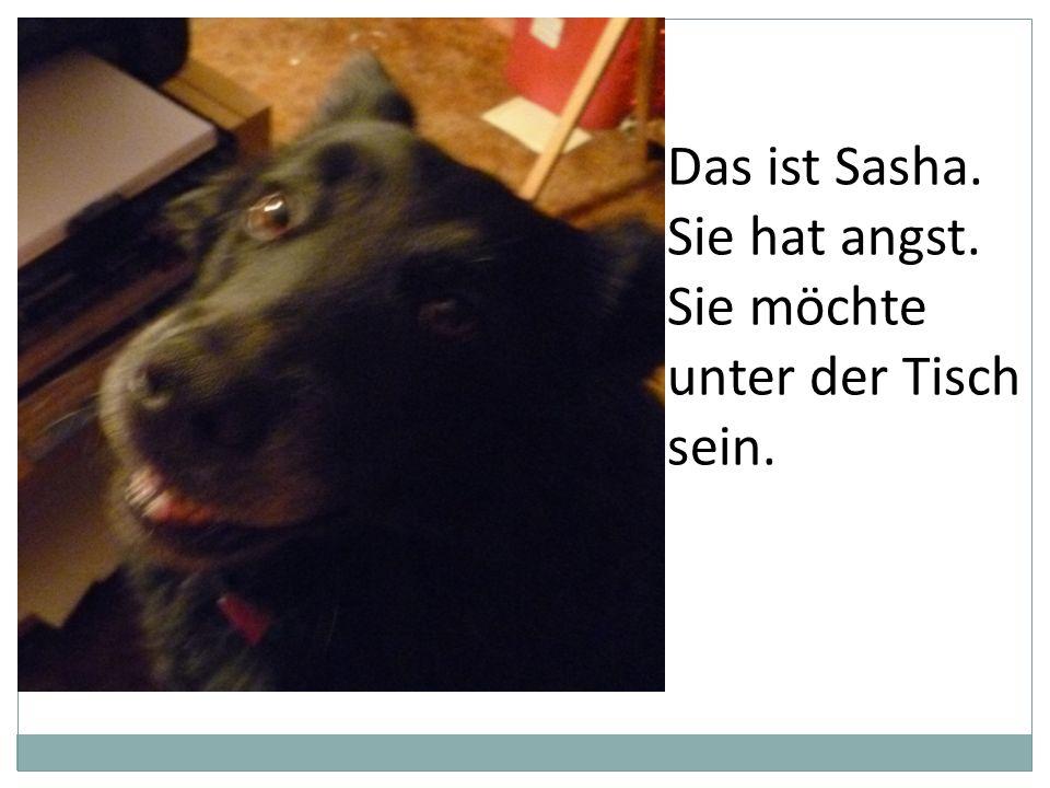 Das ist Sasha. Sie hat angst. Sie möchte unter der Tisch sein.