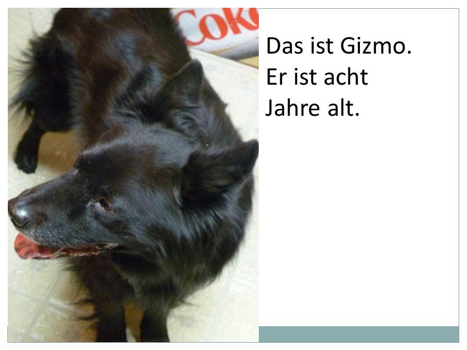 Das ist Gizmo. Er ist acht Jahre alt.