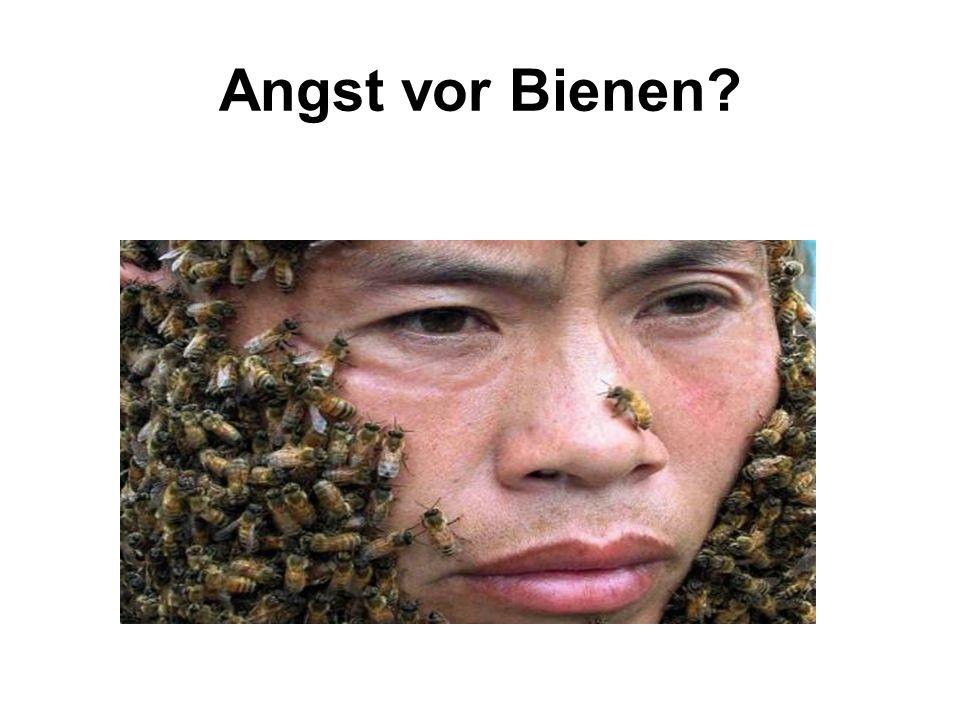 Angst vor Bienen?