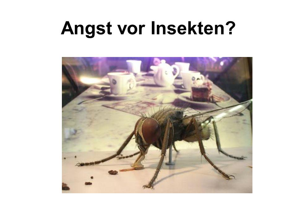Angst vor Insekten?