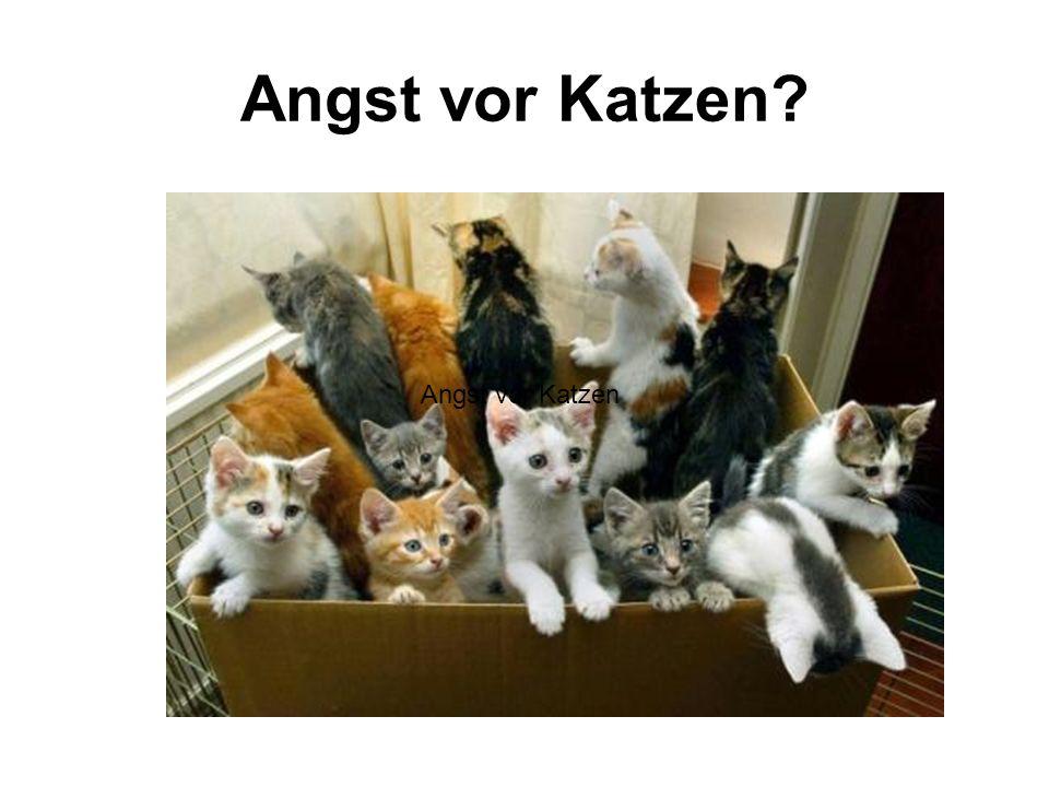 Angst vor Katzen? Angst vor Katzen