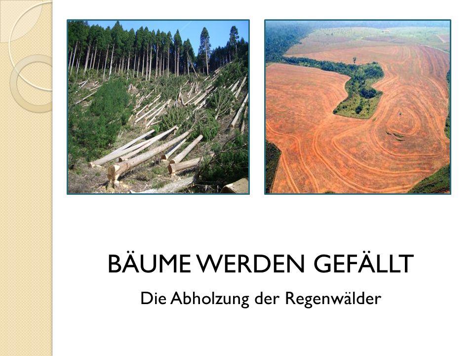 BÄUME WERDEN GEFÄLLT Die Abholzung der Regenwälder