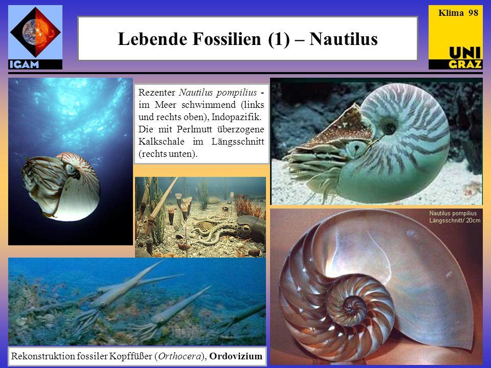 Lebende Fossilien (1) – Nautilus Rezenter Nautilus pompilius - im Meer schwimmend (links und rechts oben), Indopazifik. Die mit Perlmutt überzogene Ka