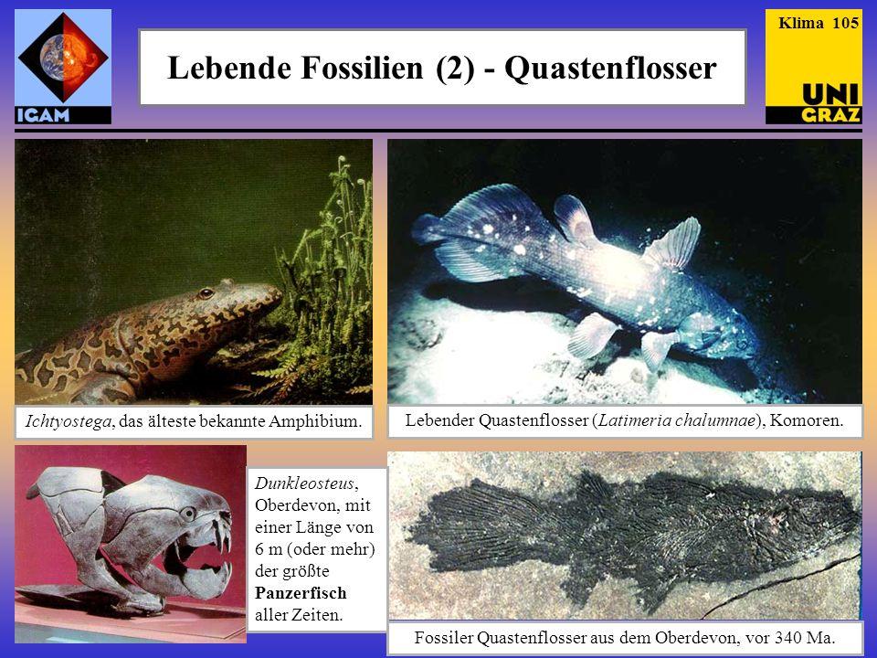 Lebende Fossilien (2) - Quastenflosser Fossiler Quastenflosser aus dem Oberdevon, vor 340 Ma. Lebender Quastenflosser (Latimeria chalumnae), Komoren.