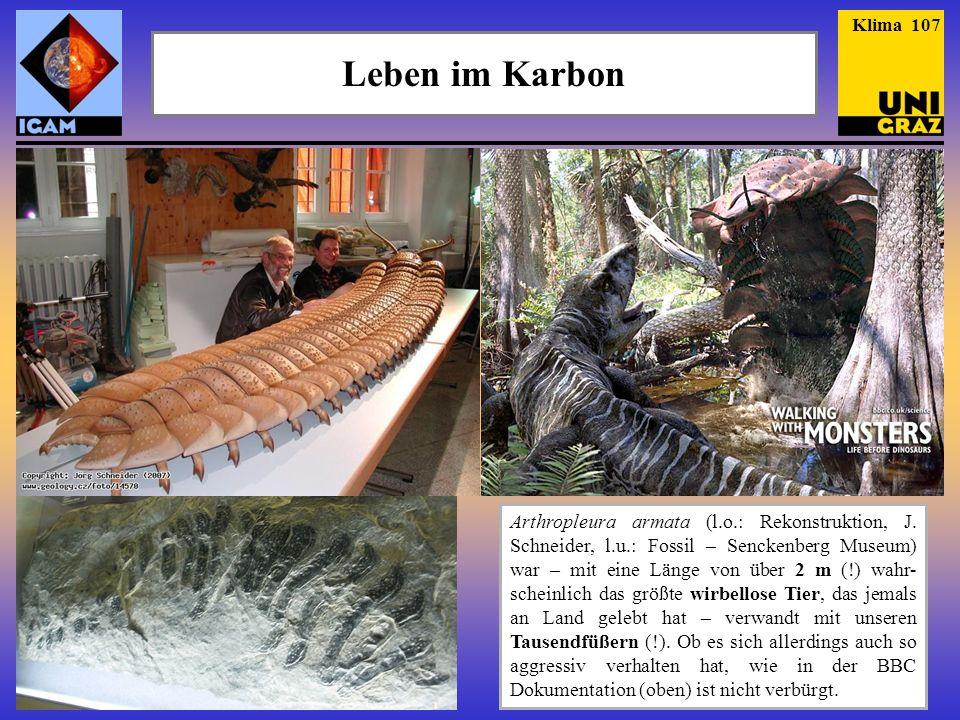 Leben im Karbon Arthropleura armata (l.o.: Rekonstruktion, J. Schneider, l.u.: Fossil – Senckenberg Museum) war – mit eine Länge von über 2 m (!) wahr