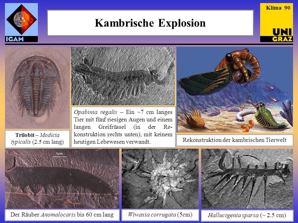 Kambrische Explosion Hallucigenia sparsa (~ 2.5 cm) Wiwaxia corrugata (5cm) Der Räuber Anomalocaris bis 60 cm lang Trilobit – Modicia typicalis (2.5 c