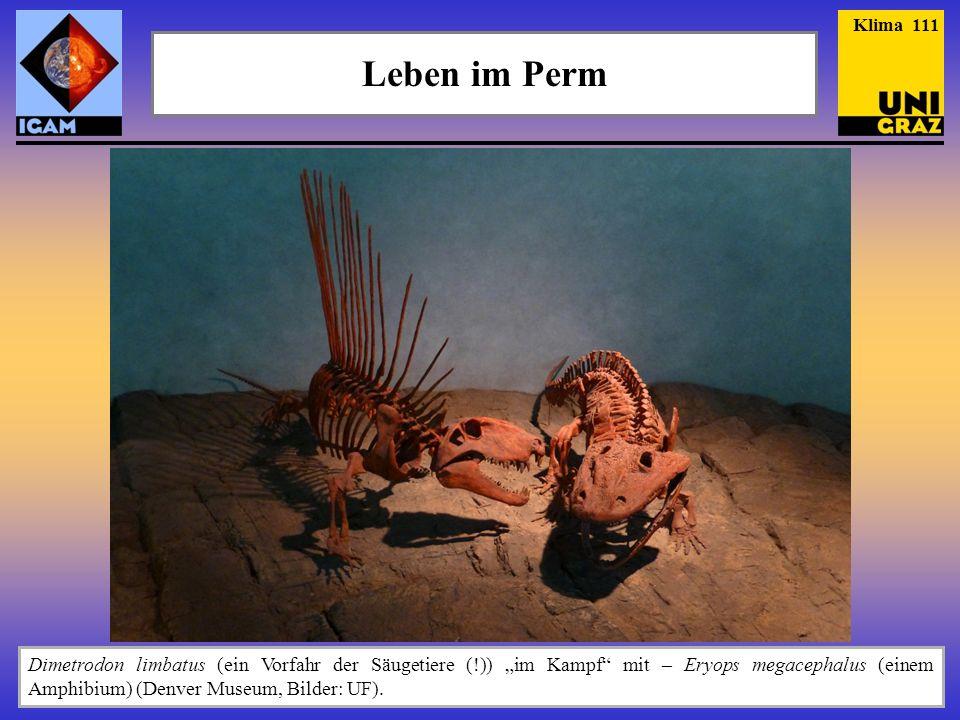 """Leben im Perm Dimetrodon limbatus (ein Vorfahr der Säugetiere (!)) """"im Kampf"""" mit – Eryops megacephalus (einem Amphibium) (Denver Museum, Bilder: UF)."""