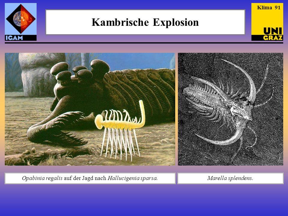 Opabinia regalis auf der Jagd nach Hallucigenia sparsa.Marella splendens. Klima 91 Kambrische Explosion