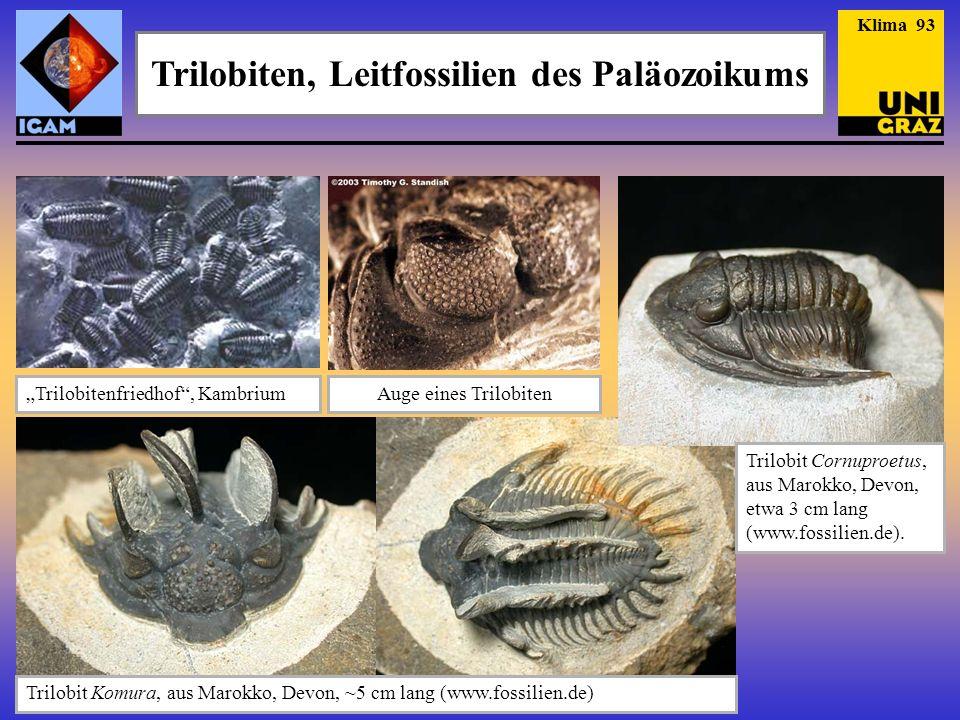 Seeskorpione Klima 104 Anhand seines 46 cm langen Kiefers kann abgeschätzt werden, dass Jaekelopterus rhenaniae – ein Seeskorpione aus dem frühen Devon, eine Länge von bis zu 2.5 m erreichte (!) (Braddy et al.