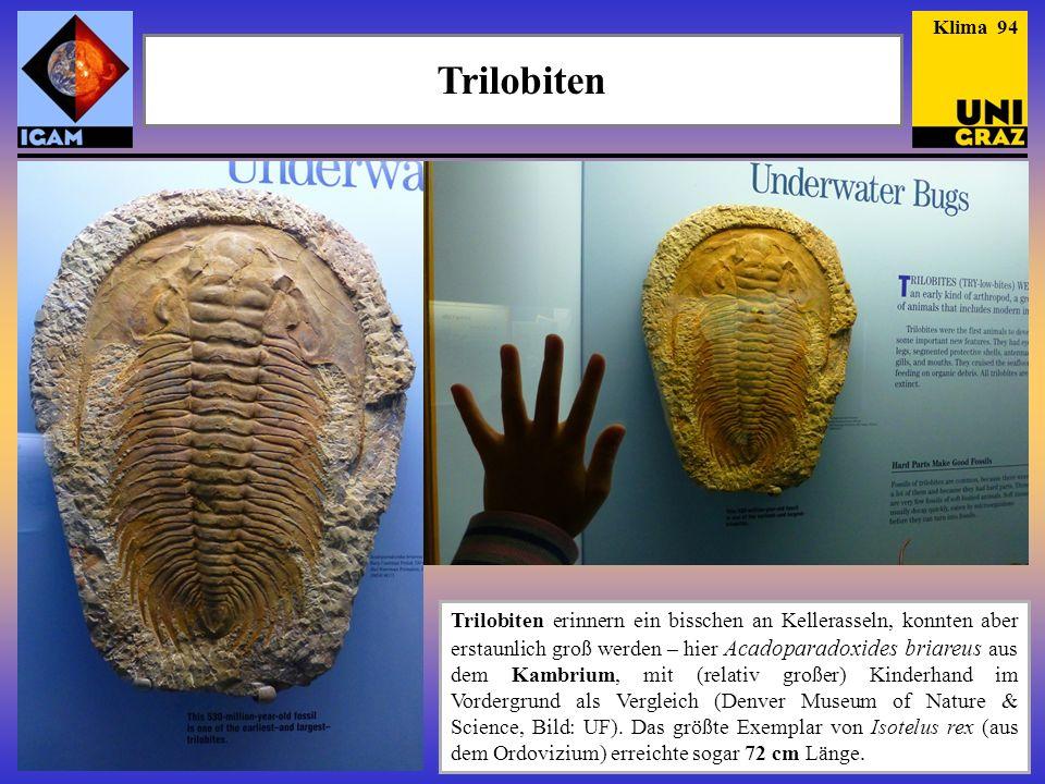 Lebende Fossilien (2) - Quastenflosser Fossiler Quastenflosser aus dem Oberdevon, vor 340 Ma.