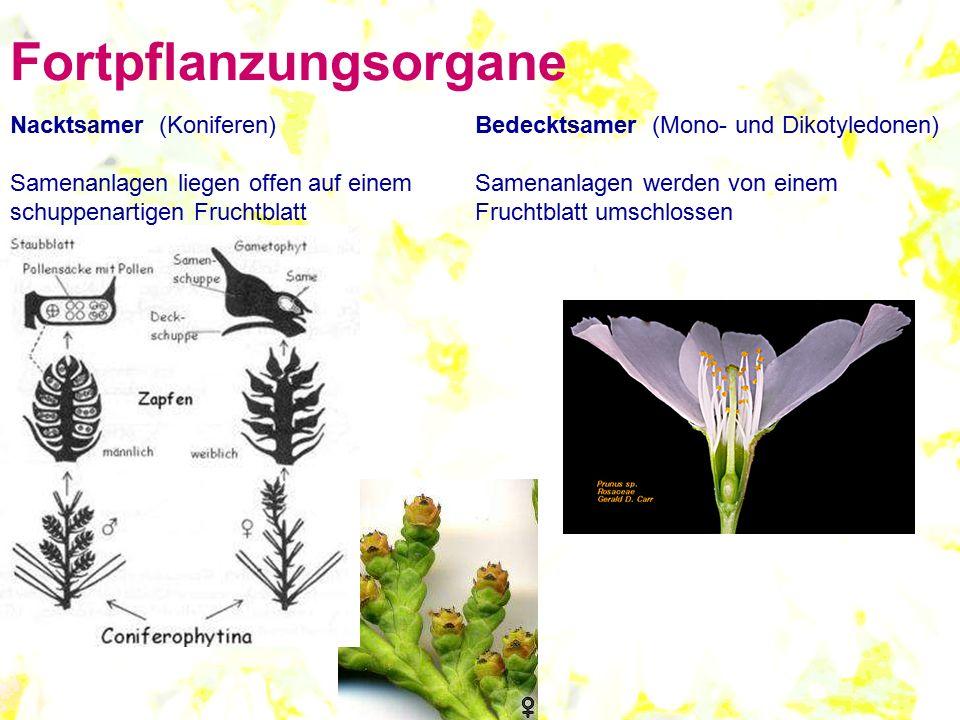 Fortpflanzungsorgane Nacktsamer (Koniferen) Samenanlagen liegen offen auf einem schuppenartigen Fruchtblatt Bedecktsamer (Mono- und Dikotyledonen) Sam