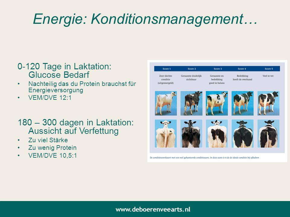 Energie: Konditionsmanagement… 0-120 Tage in Laktation: Glucose Bedarf Nachteilig das du Protein brauchst für Energieversorgung VEM/DVE 12:1 180 – 300