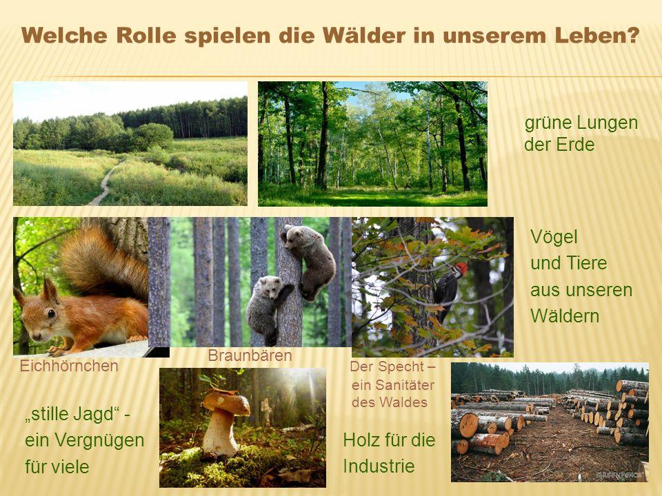 """grüne Lungen der Erde Vögel und Tiere aus unseren Wäldern Holz für die Industrie """"stille Jagd"""" - ein Vergnügen für viele Eichhörnchen Braunbären Der S"""