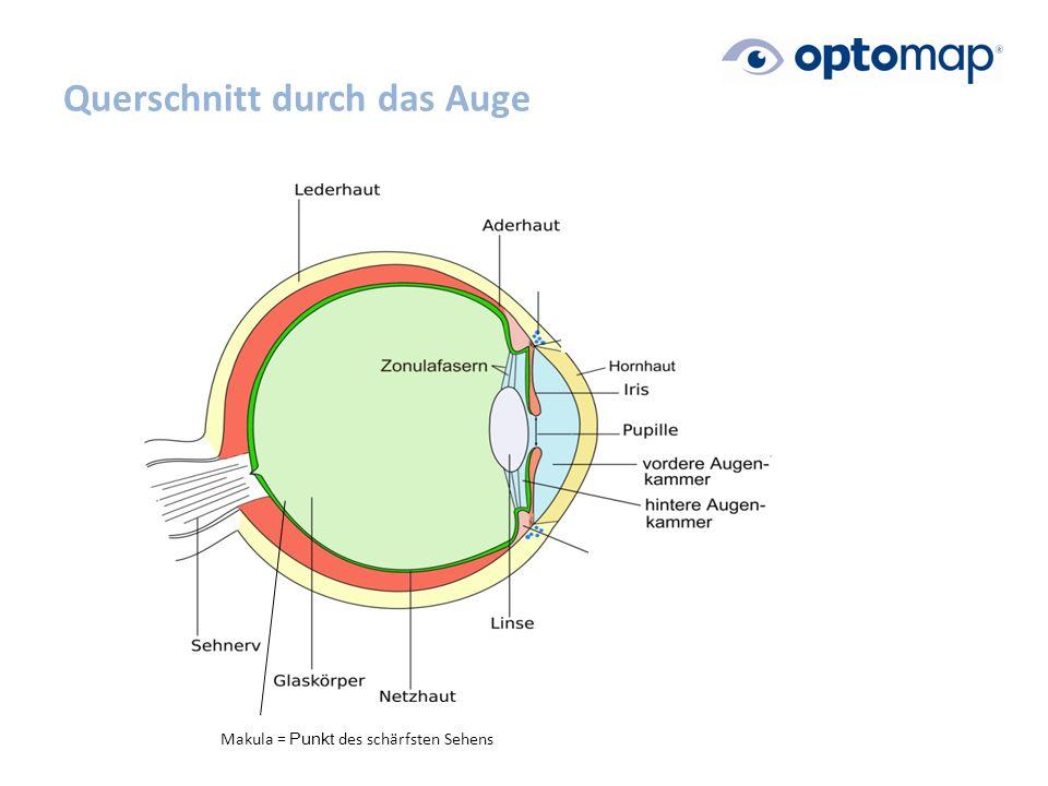 Querschnitt durch das Auge Makula = Punkt des schärfsten Sehens