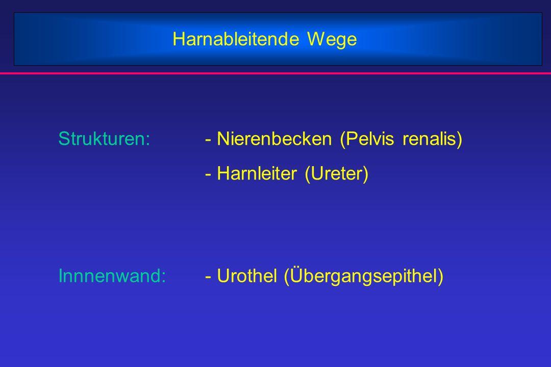 Harnableitende Wege Strukturen:- Nierenbecken (Pelvis renalis) - Harnleiter (Ureter) Innnenwand:- Urothel (Übergangsepithel)