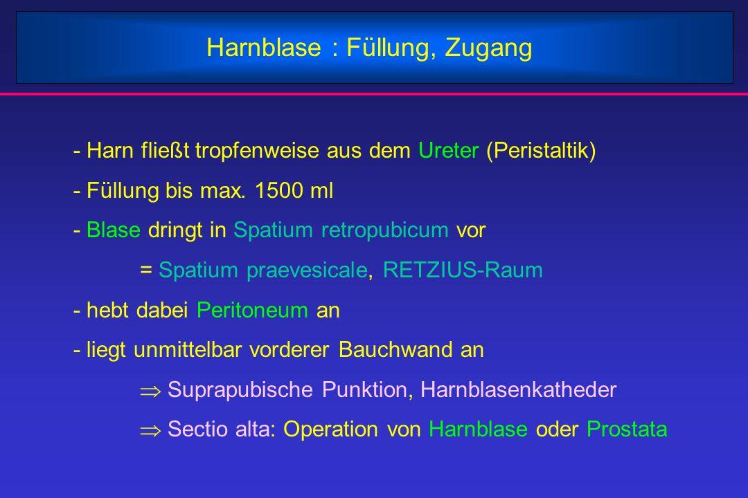 Harnblase : Füllung, Zugang - Harn fließt tropfenweise aus dem Ureter (Peristaltik) - Füllung bis max. 1500 ml - Blase dringt in Spatium retropubicum
