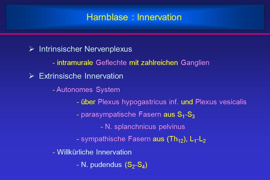Harnblase : Innervation  Intrinsischer Nervenplexus - intramurale Geflechte mit zahlreichen Ganglien  Extrinsische Innervation - Autonomes System -