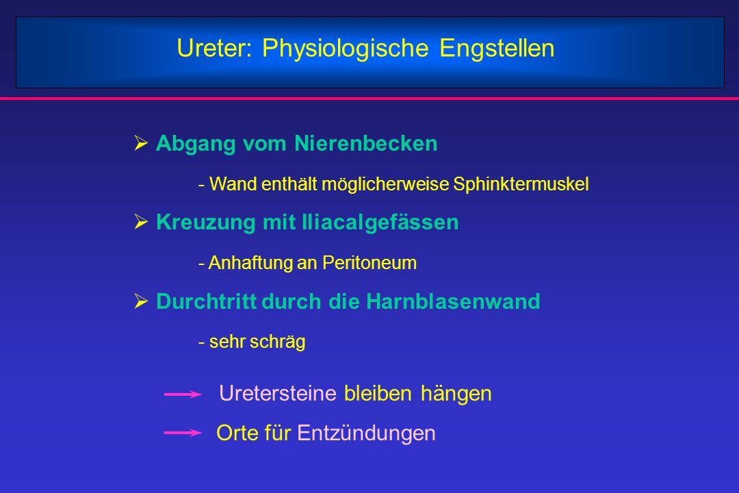 Ureter: Physiologische Engstellen  Abgang vom Nierenbecken - Wand enthält möglicherweise Sphinktermuskel  Kreuzung mit Iliacalgefässen - Anhaftung a