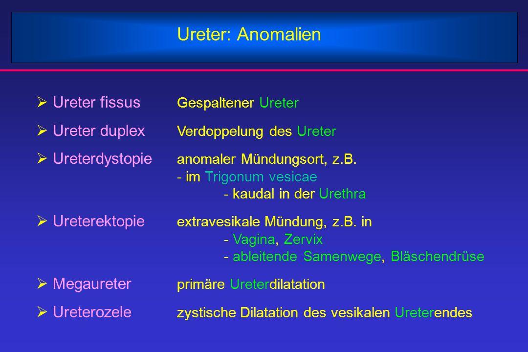 Ureter: Anomalien  Ureter fissus Gespaltener Ureter  Ureter duplex Verdoppelung des Ureter  Ureterdystopie anomaler Mündungsort, z.B. - im Trigonum