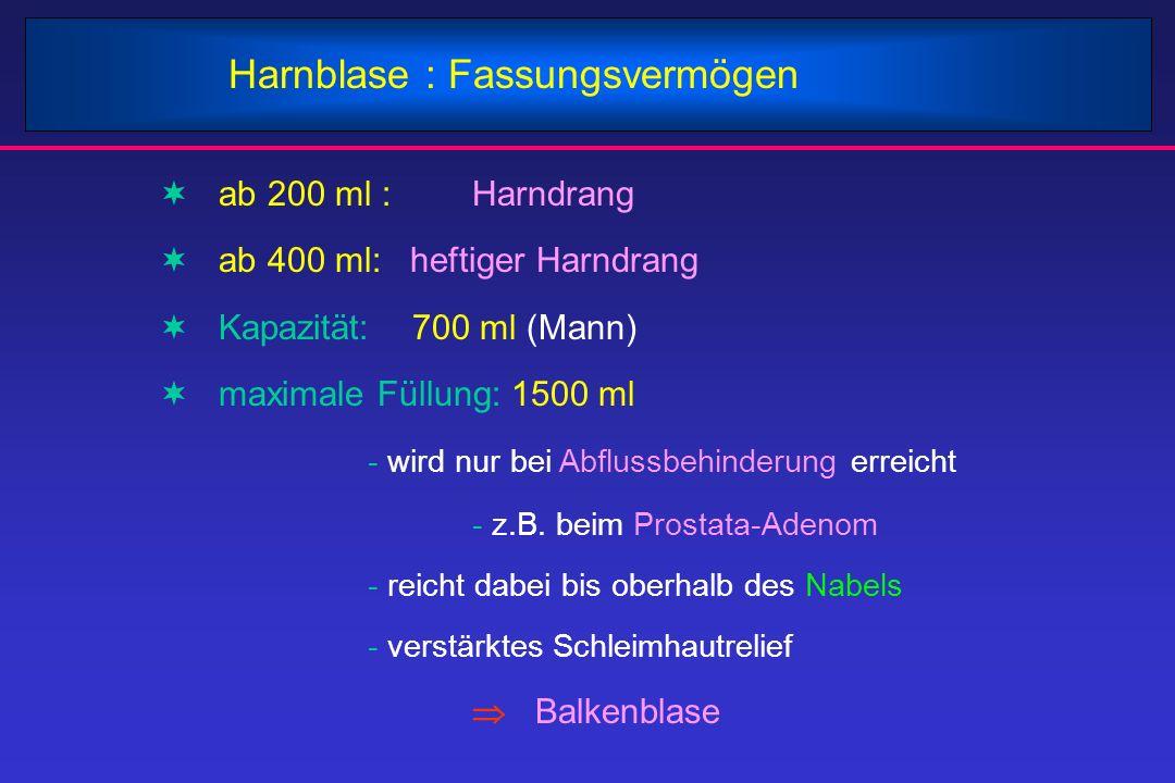 Harnblase : Fassungsvermögen  ab 200 ml : Harndrang  ab 400 ml: heftiger Harndrang  Kapazität: 700 ml (Mann)  maximale Füllung: 1500 ml - wird nur
