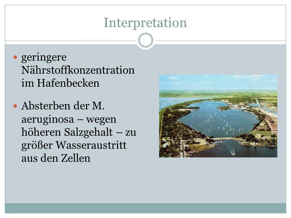 Interpretation geringere Nährstoffkonzentration im Hafenbecken Absterben der M. aeruginosa – wegen höheren Salzgehalt – zu größer Wasseraustritt aus d