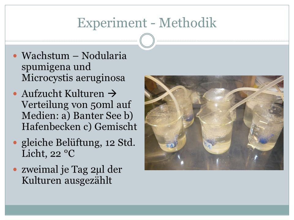 Experiment - Methodik Wachstum – Nodularia spumigena und Microcystis aeruginosa Aufzucht Kulturen  Verteilung von 50ml auf Medien: a) Banter See b) H