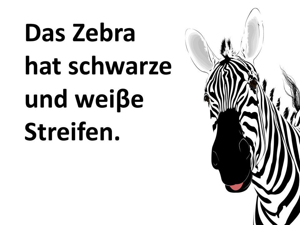 Das Zebra hat schwarze und weiβe Streifen.