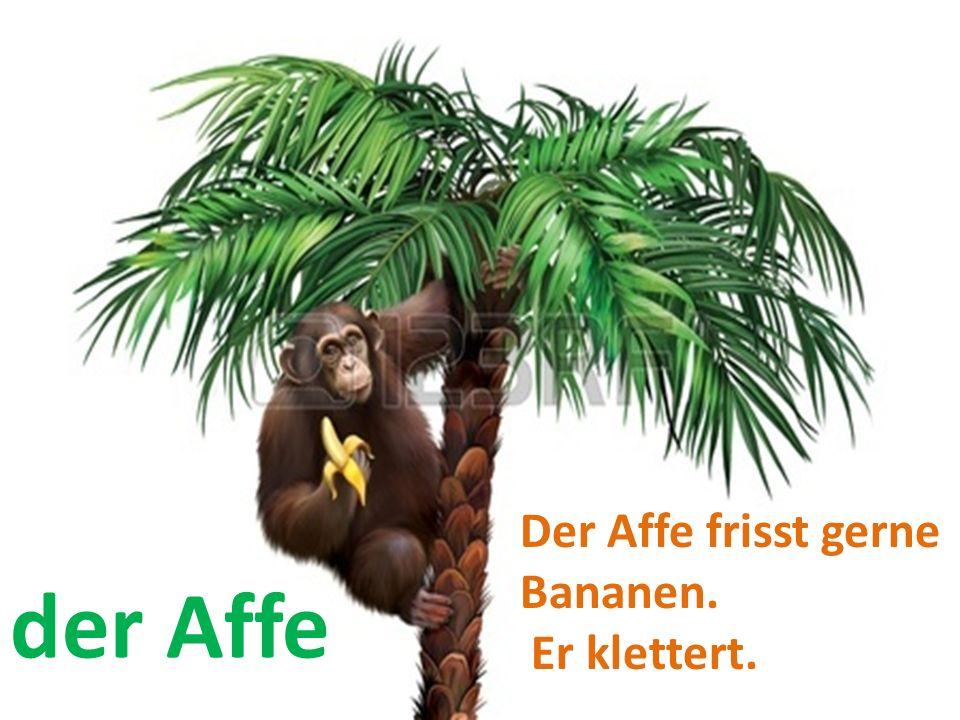 Der Affe frisst gerne Bananen. Er klettert. der Affe
